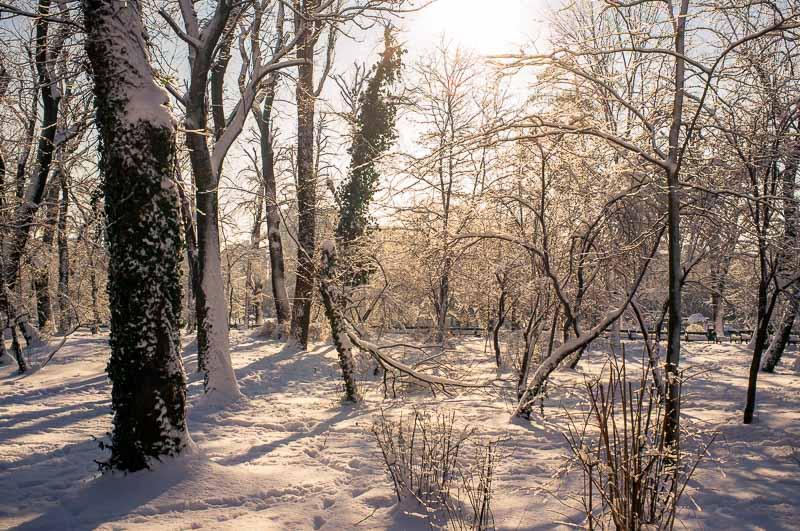Fotografie iarna  DSCF1435