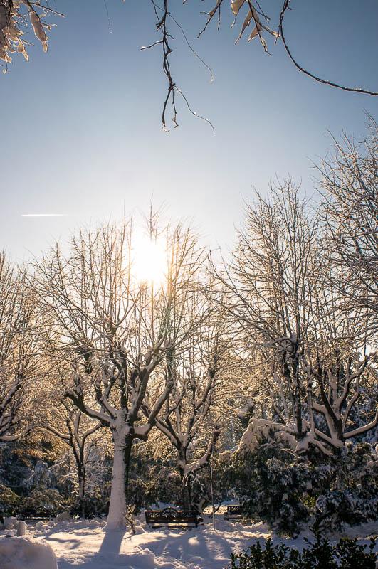 Fotografie iarna  DSCF1443