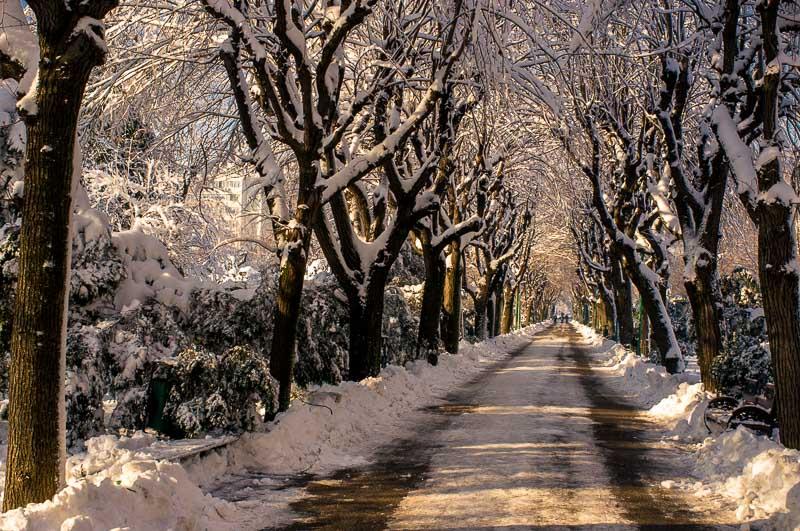 Fotografie iarna  DSCF1445