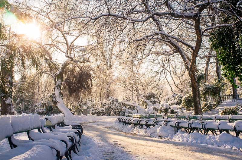 Fotografie iarna  DSCF1463